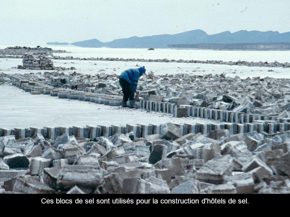 Ces blocs de sel sont utilisés pour la construction d hôtels de sel.