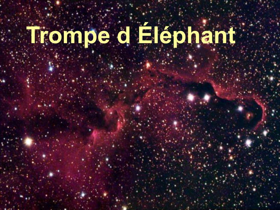 Trompe d Éléphant