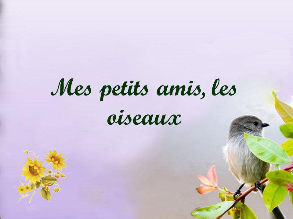 Mes petits amis, les oiseaux