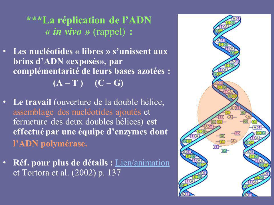 ***La réplication de l'ADN « in vivo » (rappel) :