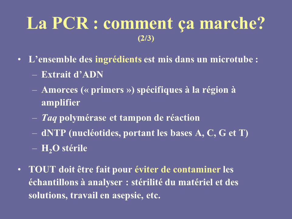 La PCR : comment ça marche (2/3)