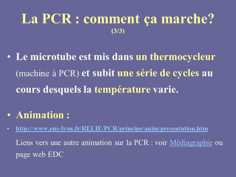 La PCR : comment ça marche (3/3)