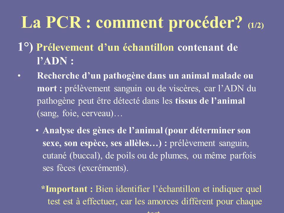 La PCR : comment procéder (1/2)