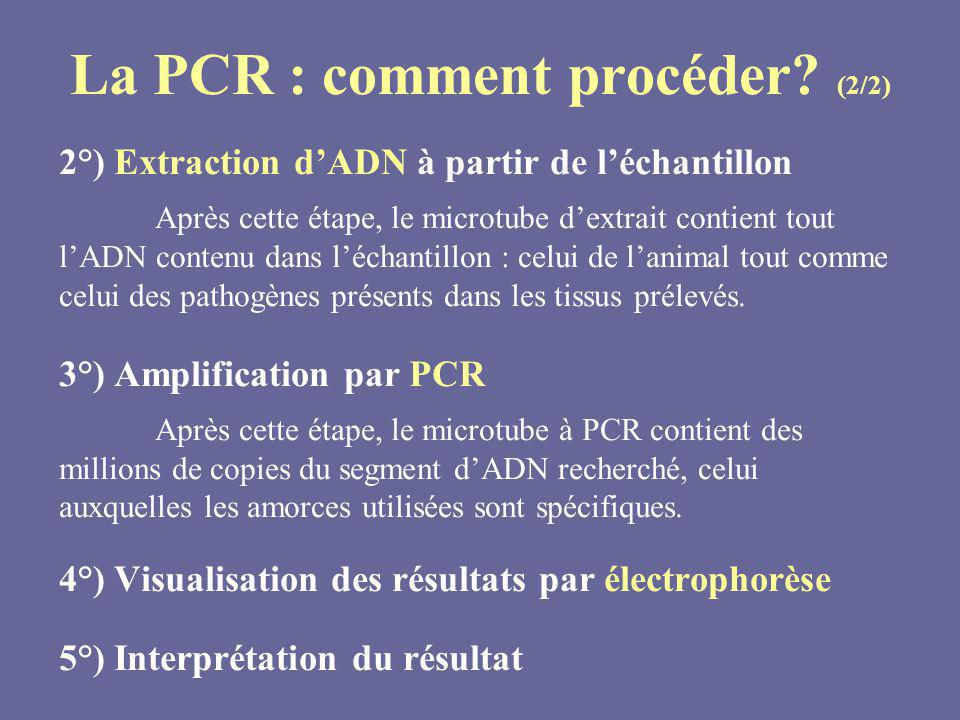 La PCR : comment procéder (2/2)
