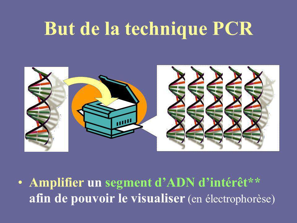 But de la technique PCR Amplifier un segment d'ADN d'intérêt** afin de pouvoir le visualiser (en électrophorèse)
