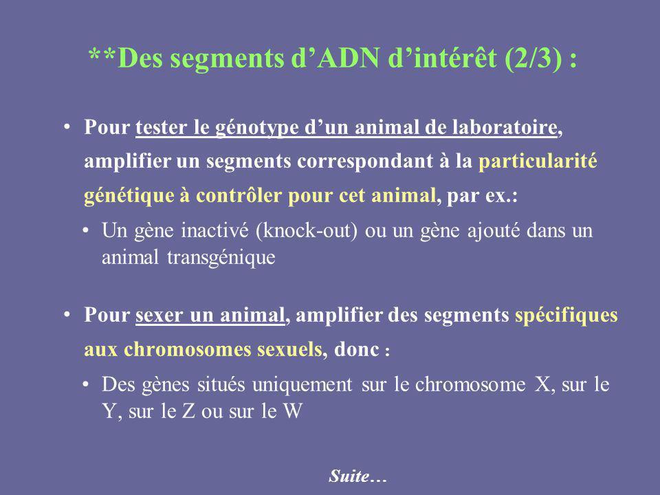 **Des segments d'ADN d'intérêt (2/3) :