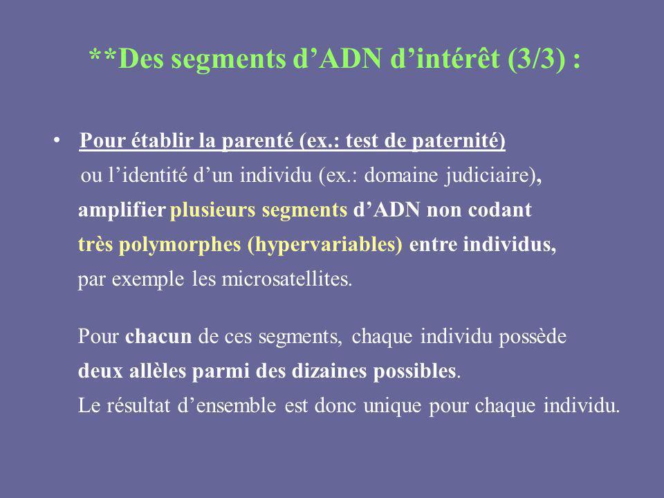 **Des segments d'ADN d'intérêt (3/3) :