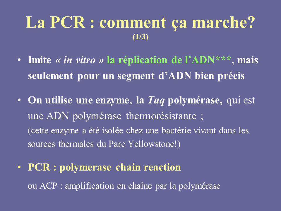 La PCR : comment ça marche (1/3)