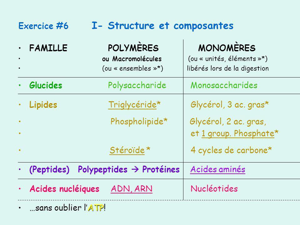 Exercice #6 I- Structure et composantes