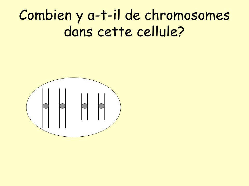 Combien y a-t-il de chromosomes dans cette cellule