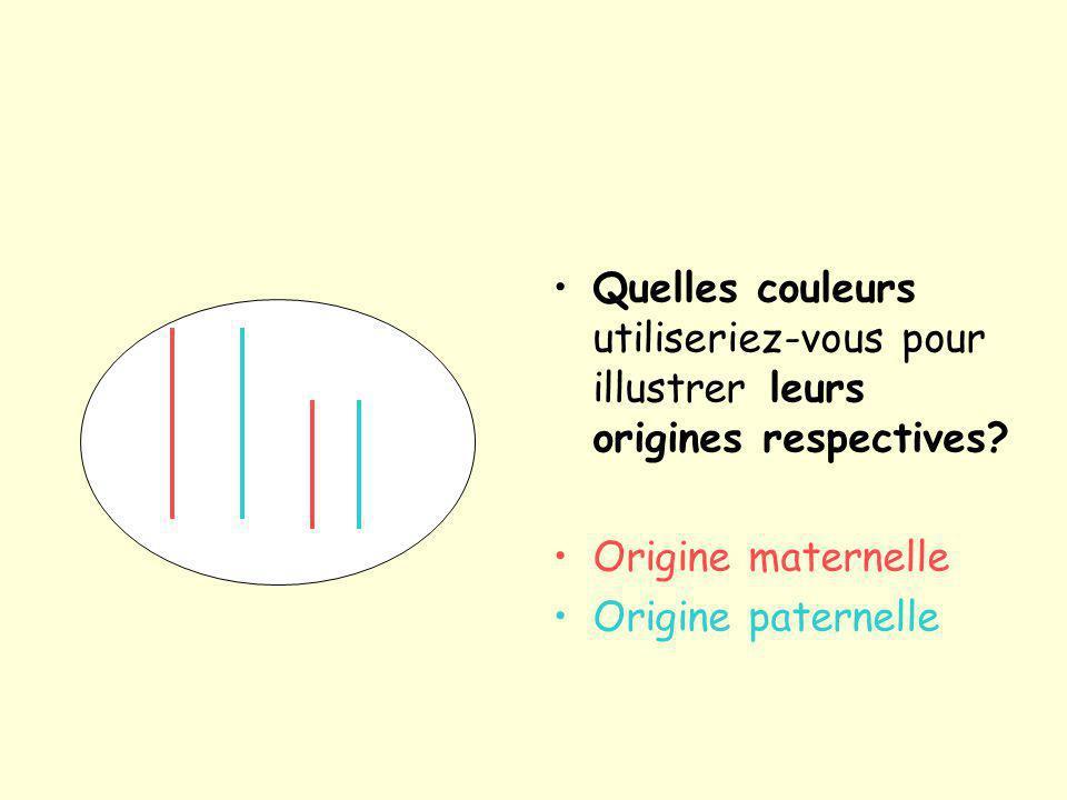 Quelles couleurs utiliseriez-vous pour illustrer leurs origines respectives