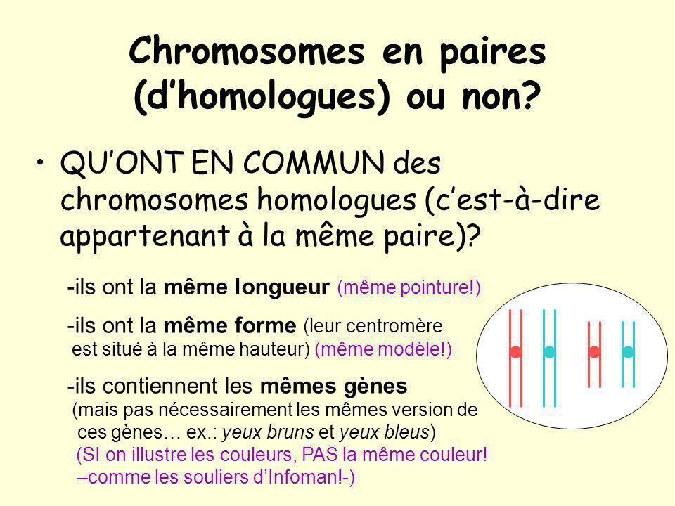 Chromosomes en paires (d'homologues) ou non