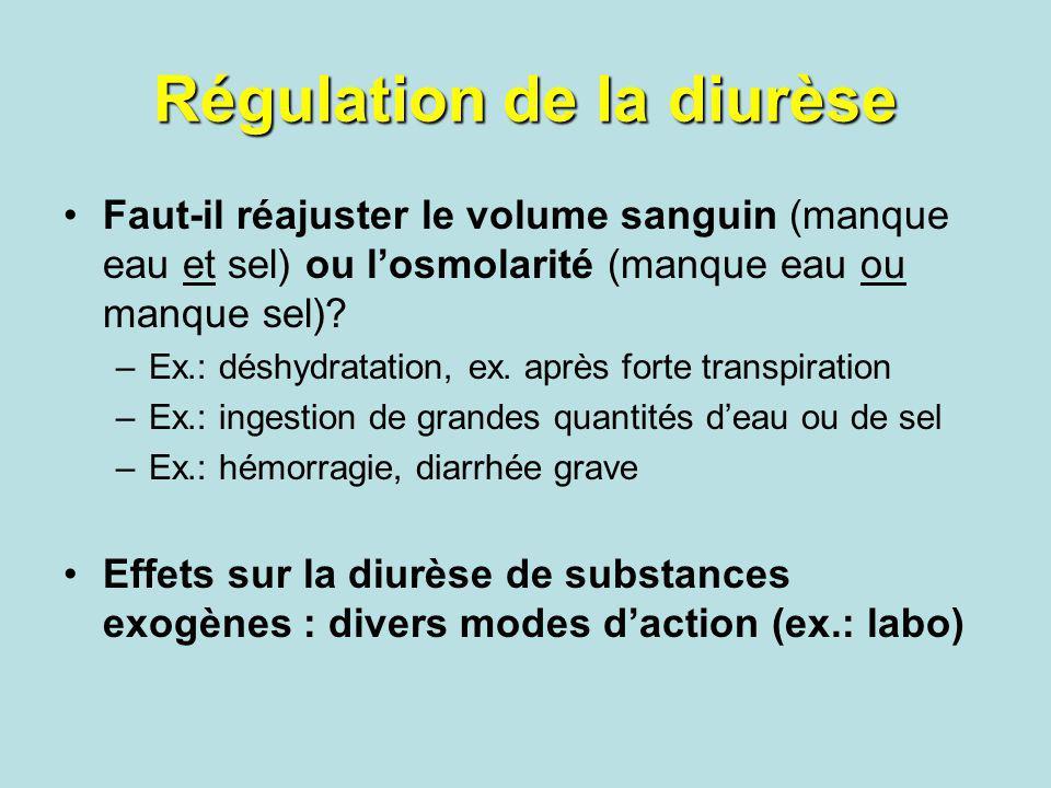 Régulation de la diurèse
