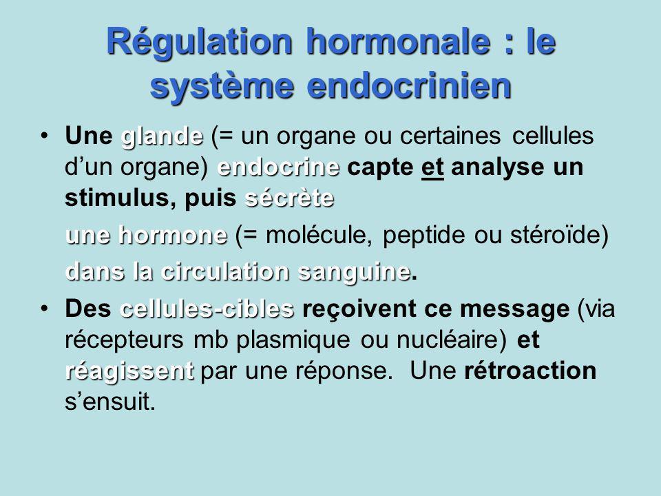 Régulation hormonale : le système endocrinien