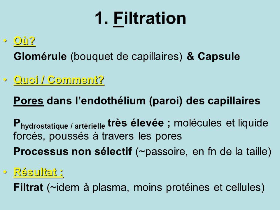 1. Filtration Où Glomérule (bouquet de capillaires) & Capsule