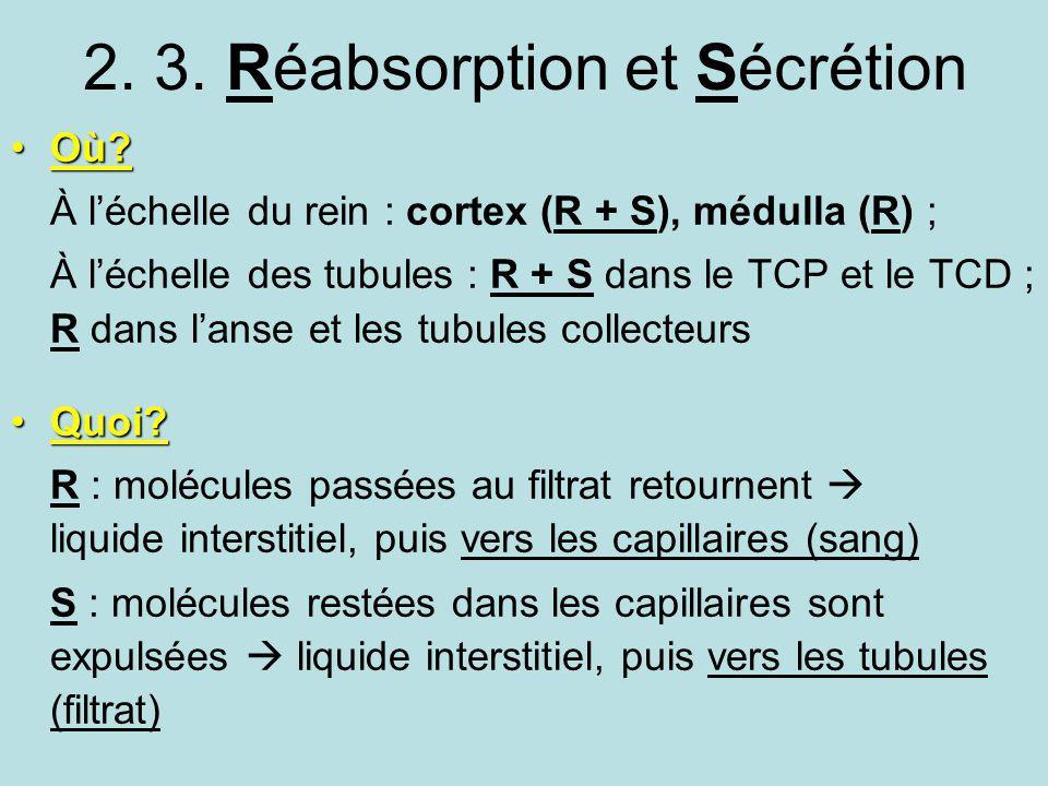 2. 3. Réabsorption et Sécrétion