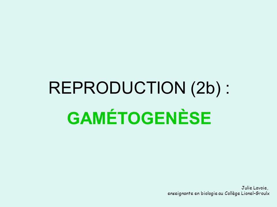 REPRODUCTION (2b) : GAMÉTOGENÈSE