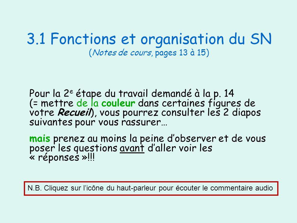 3.1 Fonctions et organisation du SN (Notes de cours, pages 13 à 15)