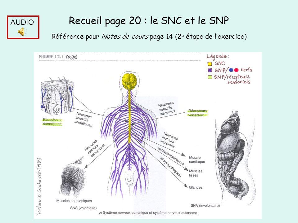 Recueil page 20 : le SNC et le SNP Référence pour Notes de cours page 14 (2e étape de l'exercice)