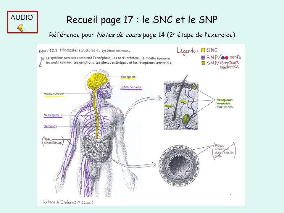 Recueil page 17 : le SNC et le SNP Référence pour Notes de cours page 14 (2e étape de l'exercice)