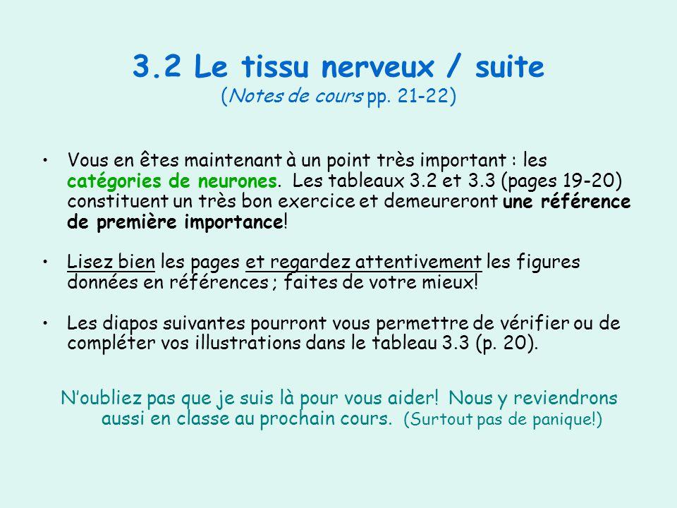 3.2 Le tissu nerveux / suite (Notes de cours pp. 21-22)