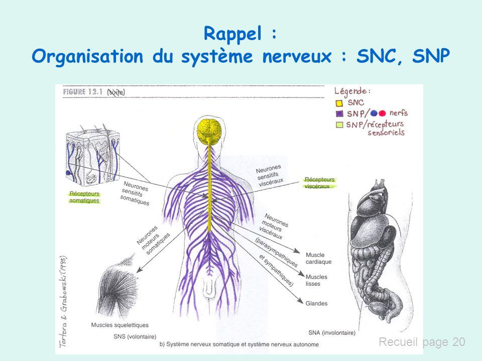Rappel : Organisation du système nerveux : SNC, SNP