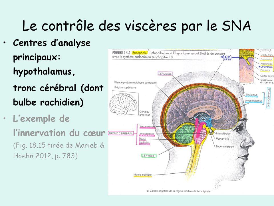 Le contrôle des viscères par le SNA