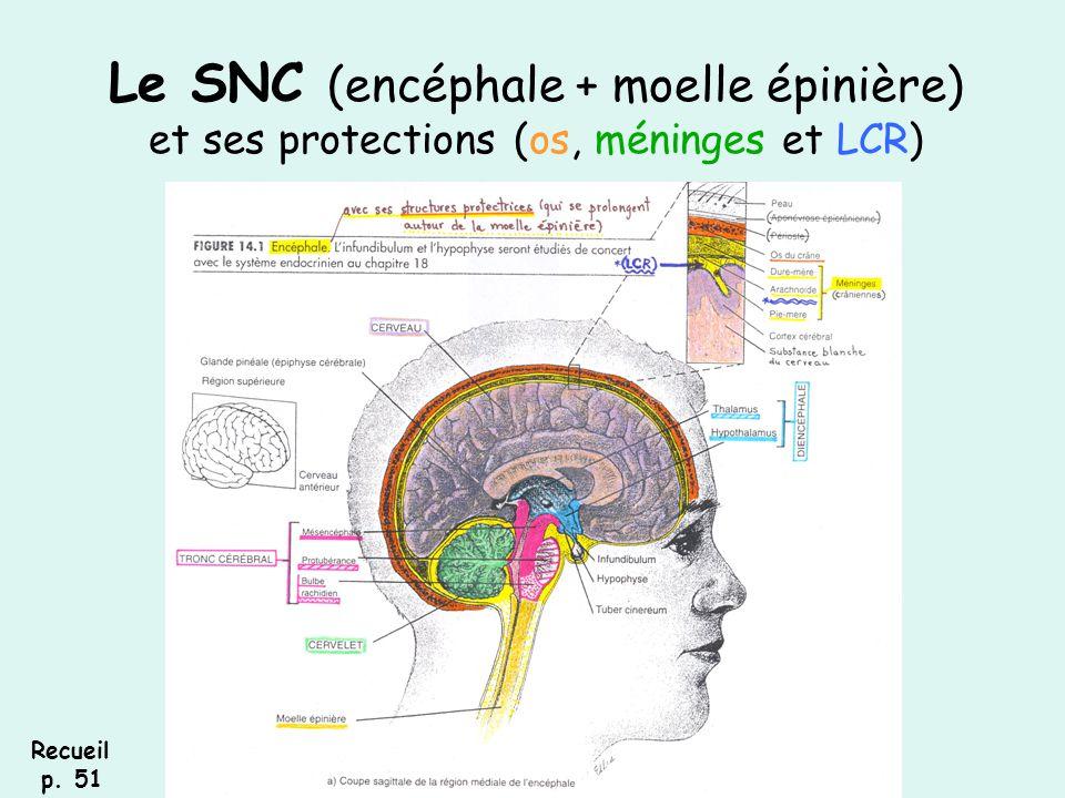 Le SNC (encéphale + moelle épinière) et ses protections (os, méninges et LCR)