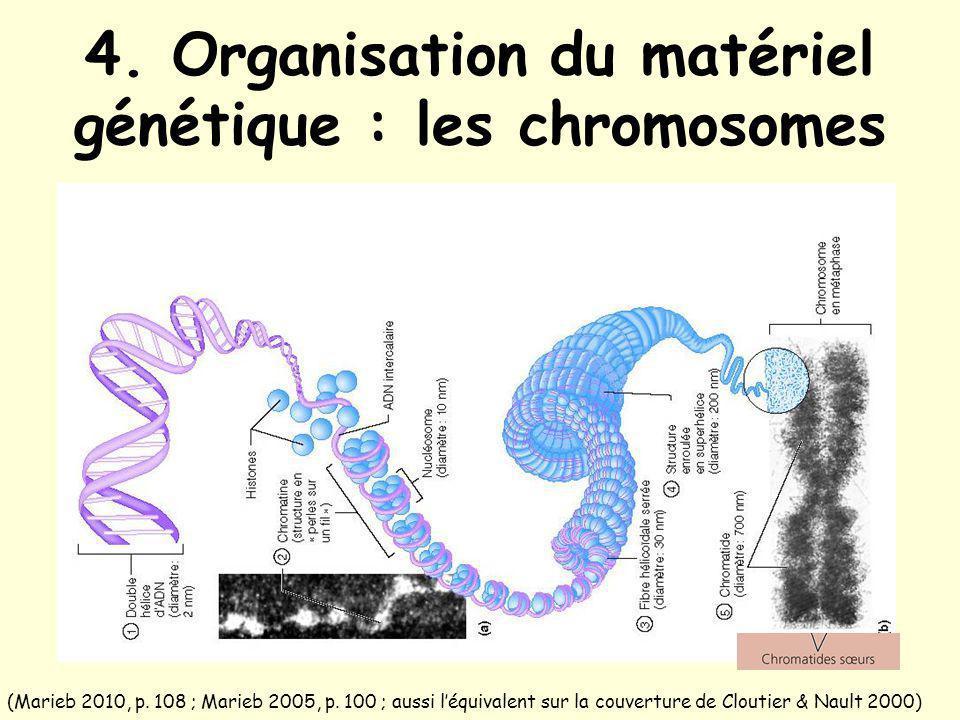4. Organisation du matériel génétique : les chromosomes