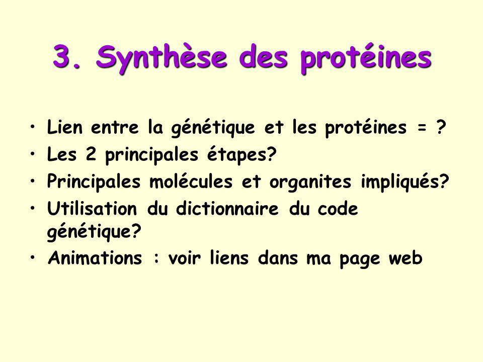3. Synthèse des protéines
