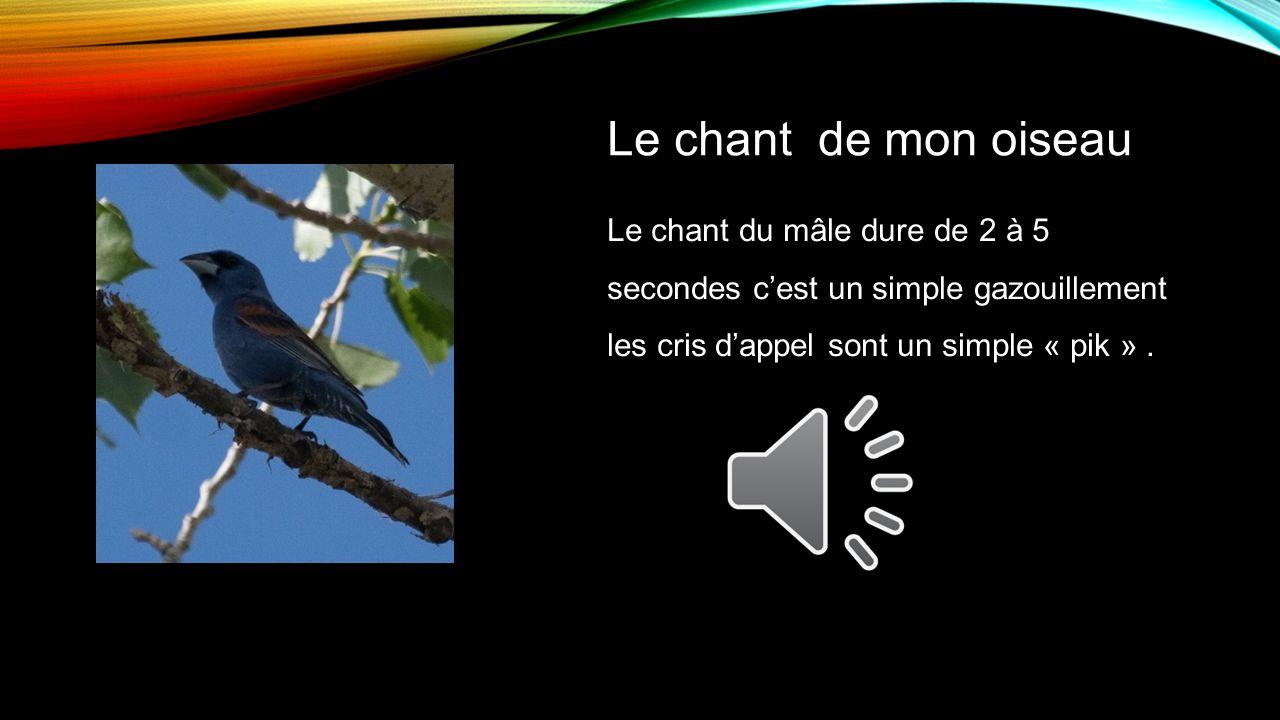 Le chant de mon oiseau Le chant du mâle dure de 2 à 5 secondes c'est un simple gazouillement les cris d'appel sont un simple « pik » .