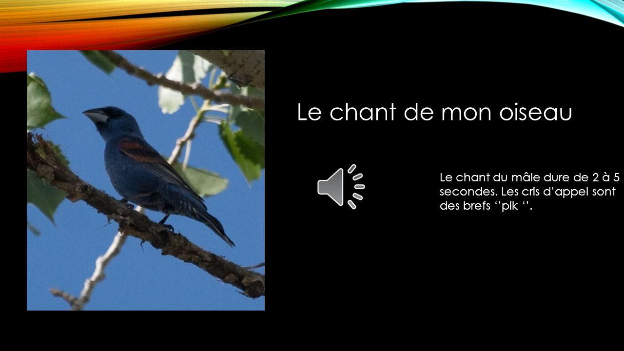 Le chant de mon oiseau Le chant du mâle dure de 2 à 5 secondes.