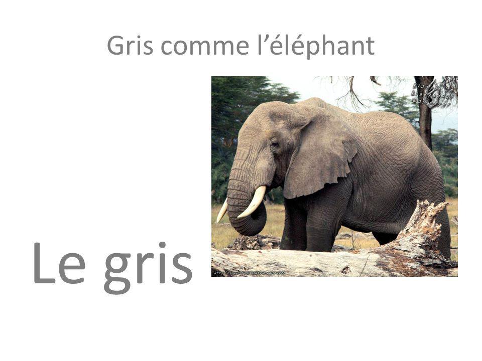 Gris comme l'éléphant Le gris