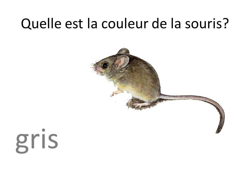 Quelle est la couleur de la souris