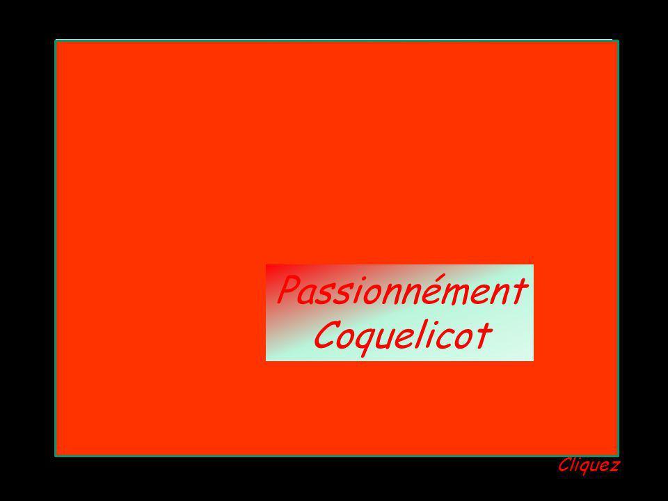 Passionnément Coquelicot Passionnément Coquelicot