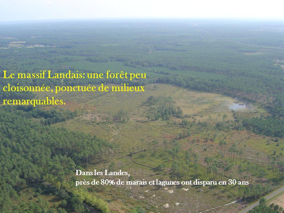 Le massif Landais: une forêt peu cloisonnée, ponctuée de milieux remarquables.