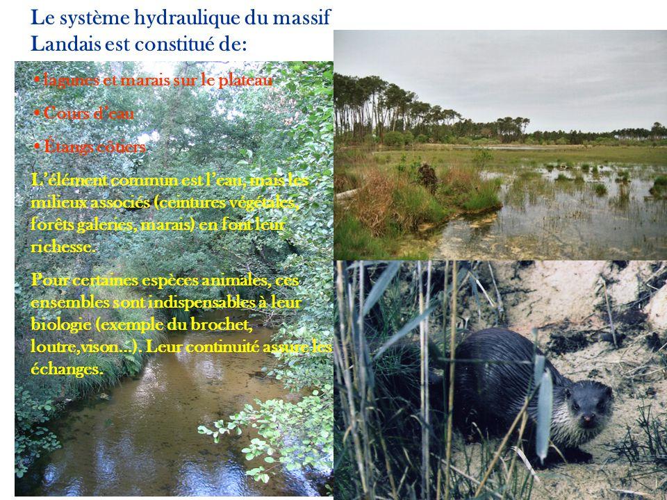 Le système hydraulique du massif Landais est constitué de: