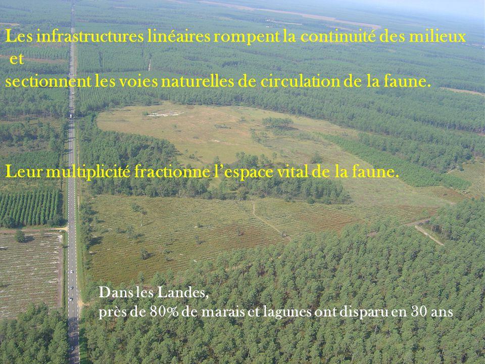 Les infrastructures linéaires rompent la continuité des milieux et