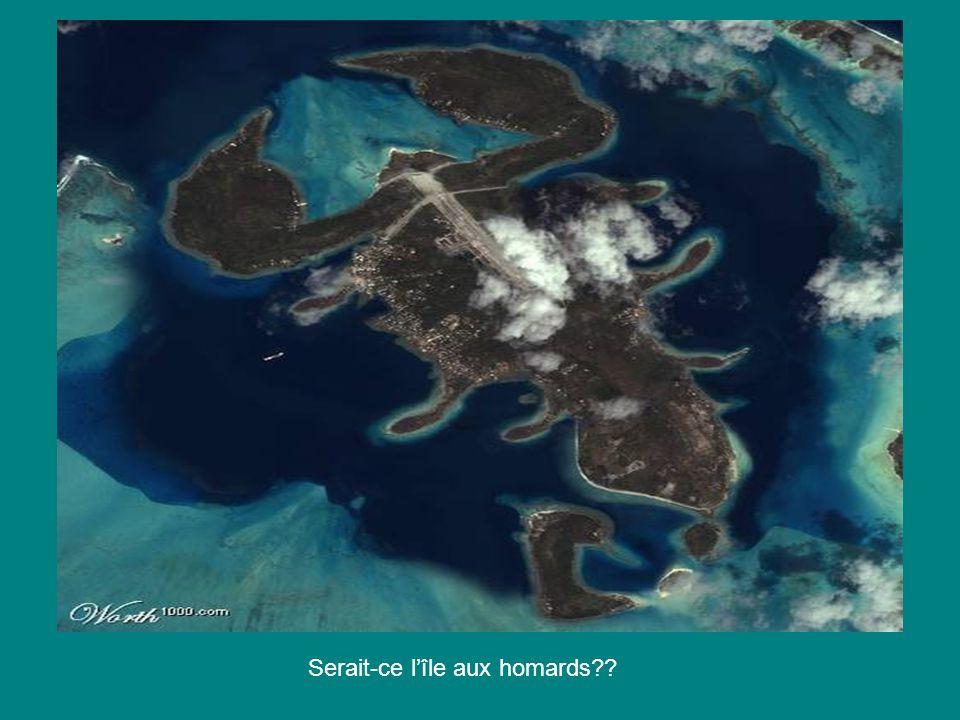 Serait-ce l'île aux homards