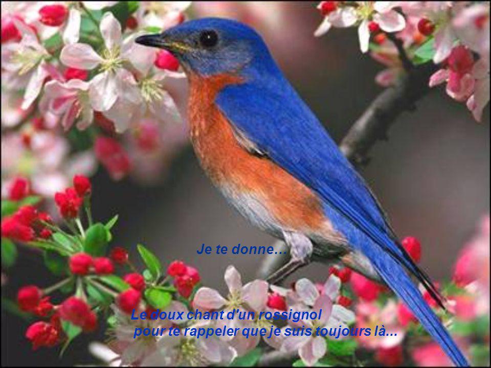 Je te donne… Le doux chant d un rossignol pour te rappeler que je suis toujours là...