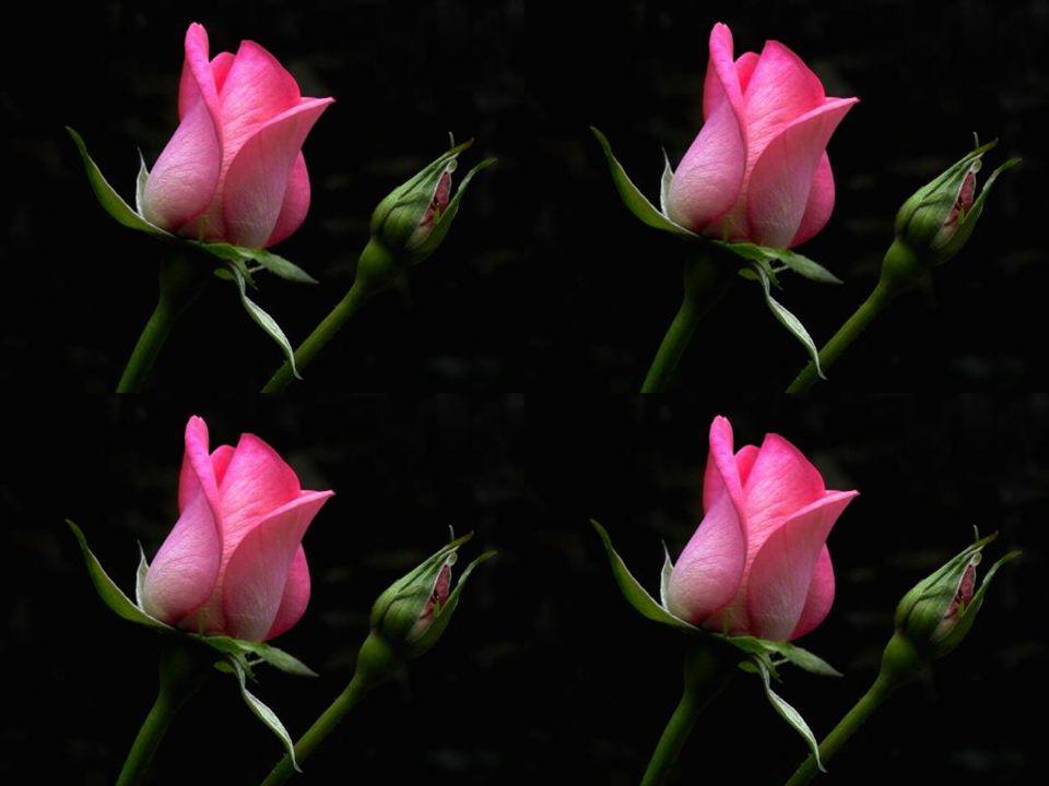 Reine des fleurs