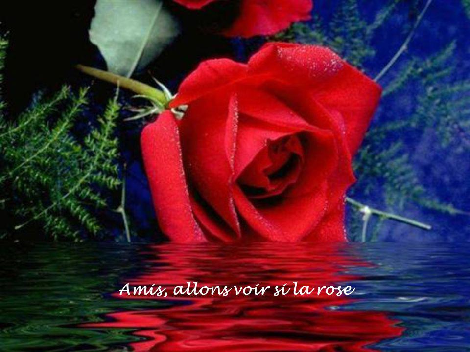 Amis, allons voir si la rose