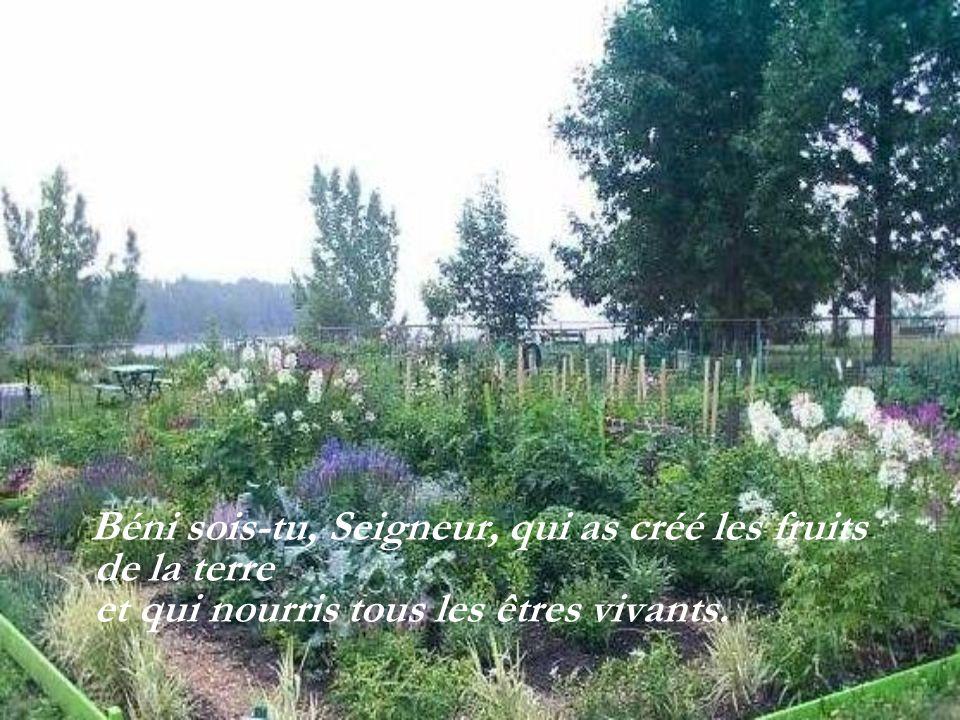 Béni sois-tu, Seigneur, qui as créé les fruits de la terre et qui nourris tous les êtres vivants.