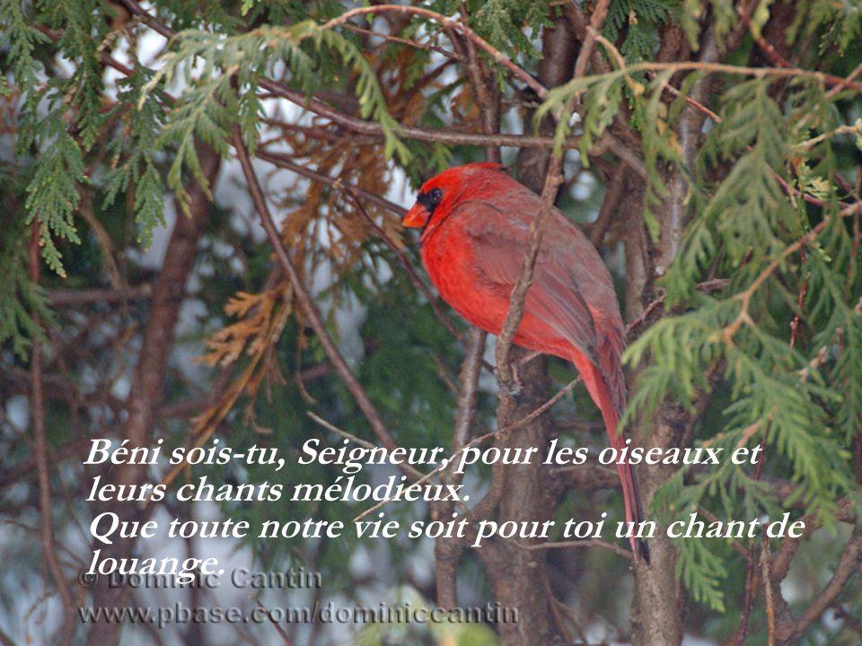 Béni sois-tu, Seigneur, pour les oiseaux et leurs chants mélodieux