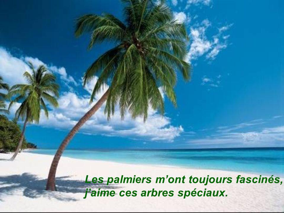 Les palmiers m'ont toujours fascinés,