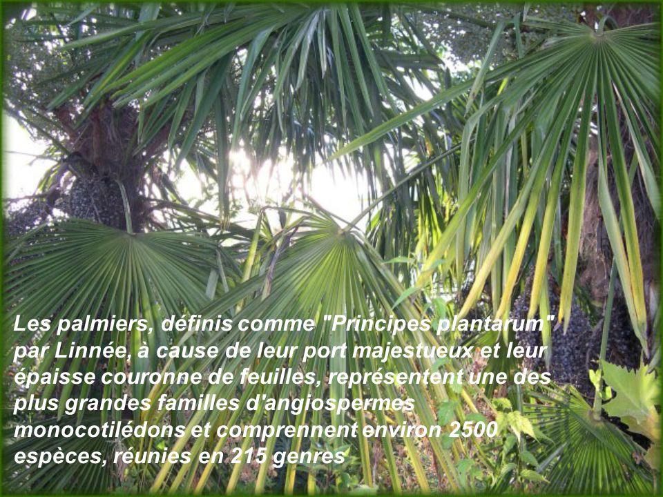 Les palmiers, définis comme Principes plantarum par Linnée, à cause de leur port majestueux et leur épaisse couronne de feuilles, représentent une des plus grandes familles d angiospermes monocotilédons et comprennent environ 2500 espèces, réunies en 215 genres