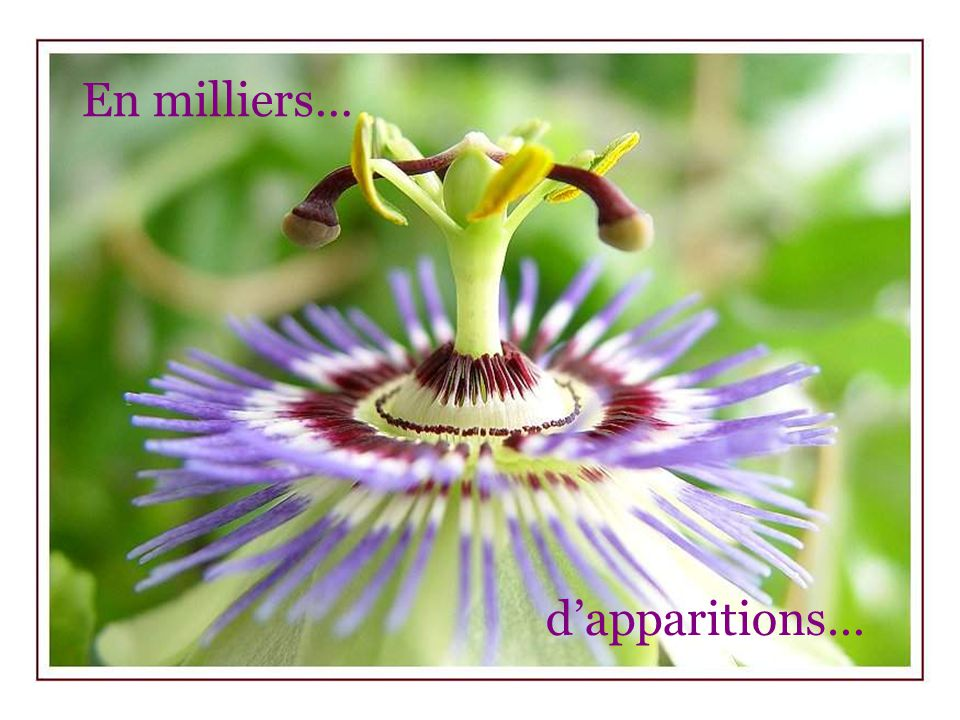 En milliers… d'apparitions…