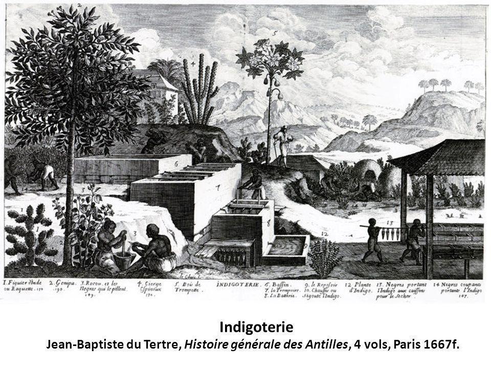 Indigoterie Jean-Baptiste du Tertre, Histoire générale des Antilles, 4 vols, Paris 1667f.