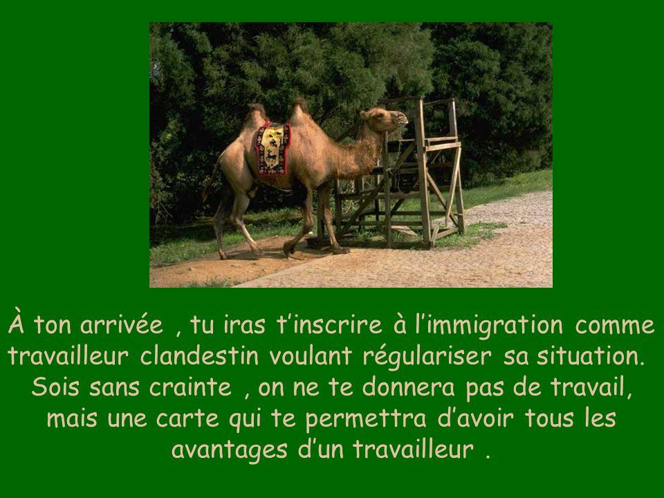 À ton arrivée , tu iras t'inscrire à l'immigration comme travailleur clandestin voulant régulariser sa situation.
