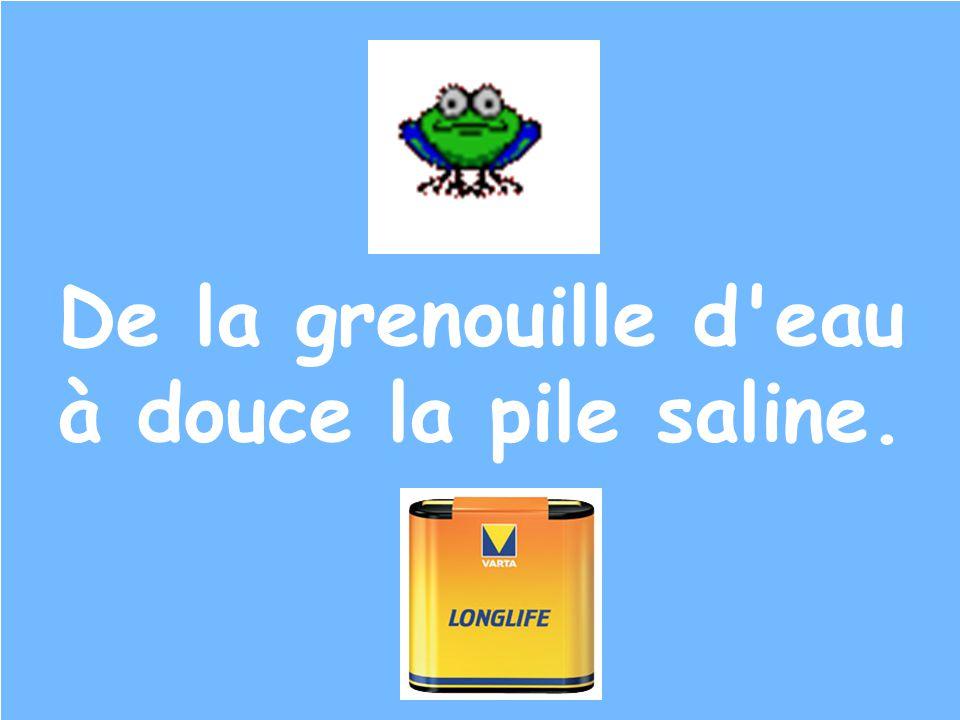 De la grenouille d eau à douce la pile saline.